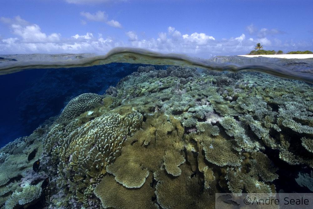 A foto preferida - recife de coral em Rongelap