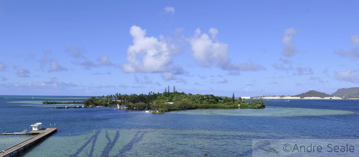 Coconut Island - a ilha dos Outros