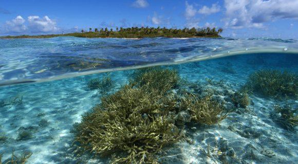 Sexta Sub: a ilha