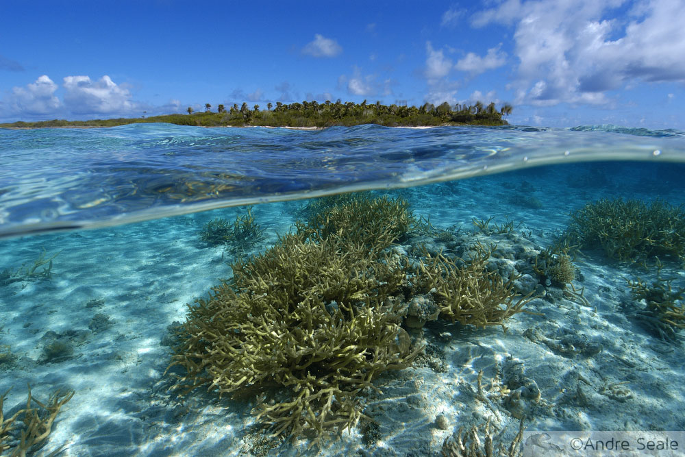 Sexta Sub - A Ilha
