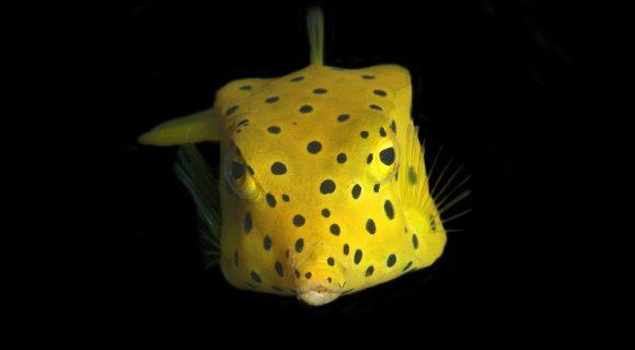 Sexta Sub: ai, ai, ai, que peixe sensacional!
