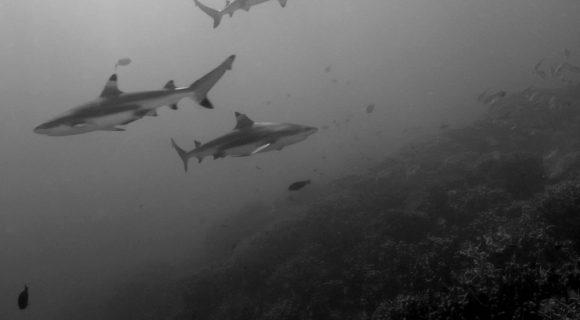Pequenas anotações de viagens virtuais 53: tubaronices