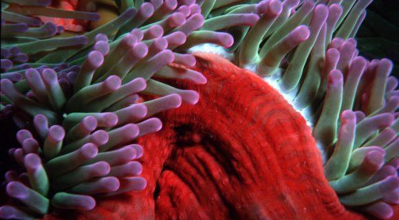 Sexta Sub: Grande Barreira de Corais