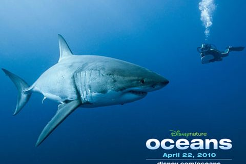 Abrace um tubarão