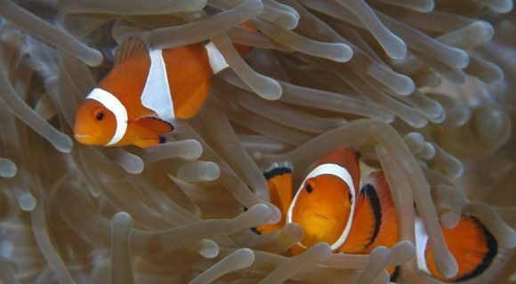 Sexta Sub: dois Nemos