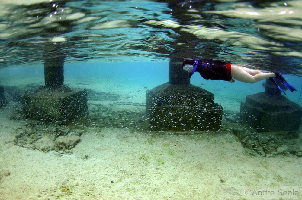 Snorkel em Cozumel - México - Caribe