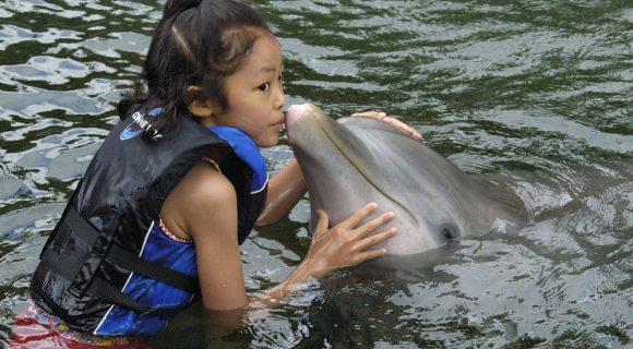 Os golfinhos d'A enseada – de novo