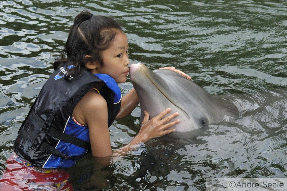 Os golfinhos de A Enseada