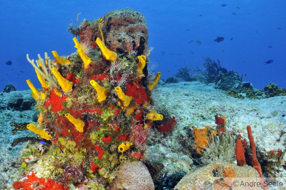 Recife de corais - mergulho em Cozumel - Caribe - México