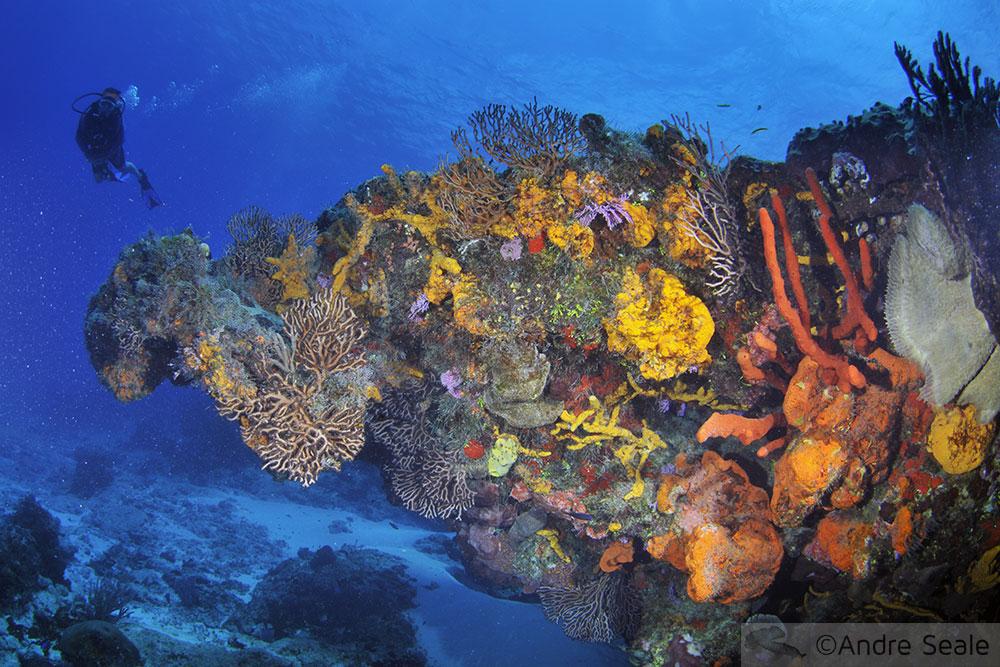 Mergulho em Cozumel - recife de corais  - México