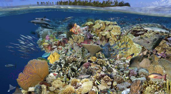 Sexta Sub: colagem de corais