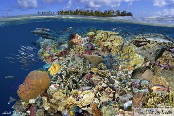 Colagem de corais - ArteSub - por André Seale