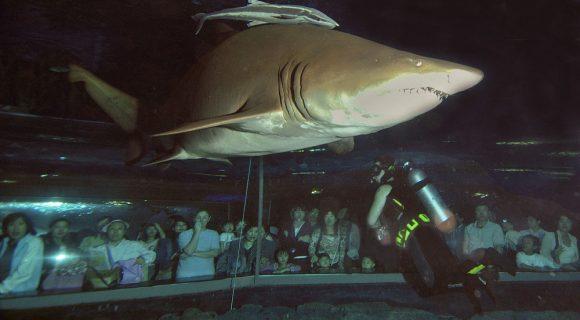 Sexta Sub: dentro de um aquário com tubarões