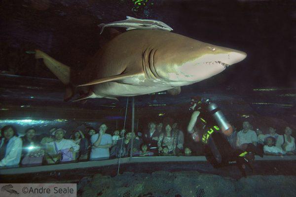 Aquário com tubarões
