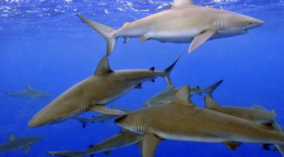 Sexta Sub: tubarões no Horizonte