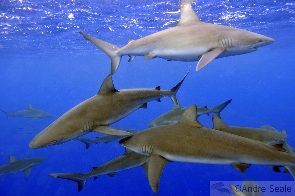Tubarões no horizonte
