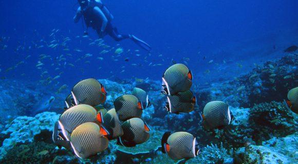 Sexta Sub: sobre a proibição do mergulho na Tailândia