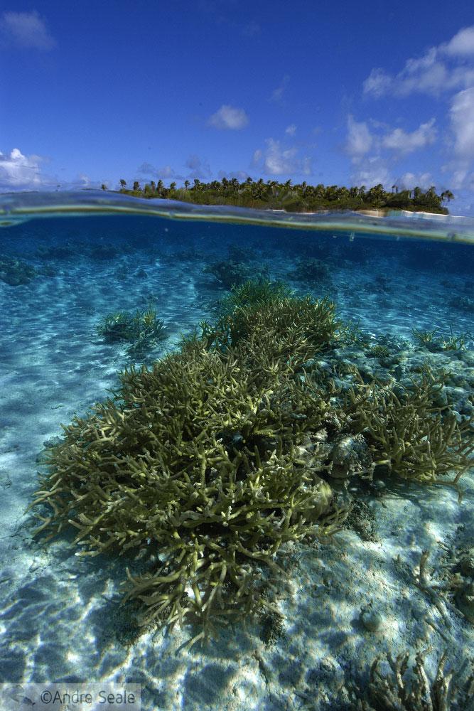 Relax - coral tropical dia de sol