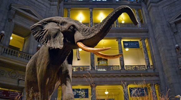 Um gostinho do Museu Nacional de História Natural