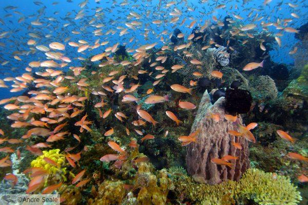 Recife de corais saudável e biodiverso