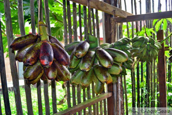 Banana Karat