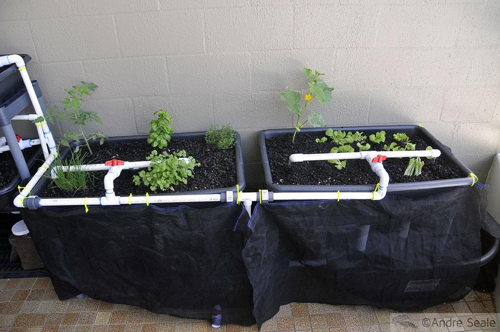 Sistema simples de Aquapônica para horta caseira