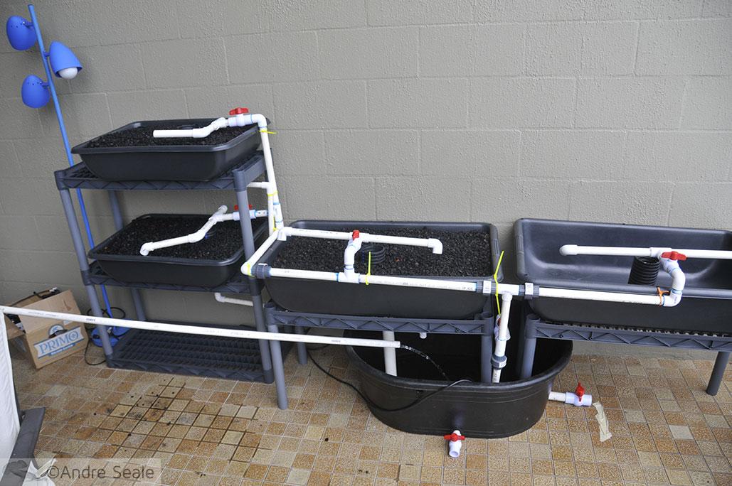 Encanamentos do sistema de aquaponia