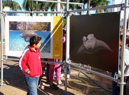 """Exposição """"Jardins Marinhos Tropicais"""" em Fernandópolis"""