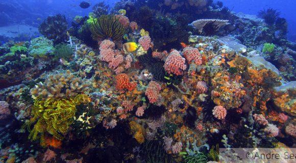 Sexta Sub: a grave situação dos oceanos