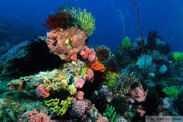 Underwater rainbow