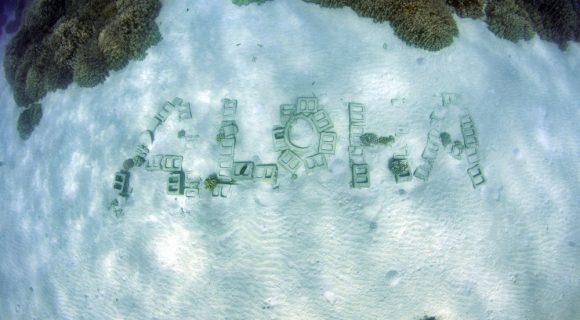 Sexta Sub: aloha!