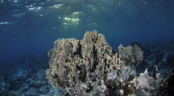 Sexta Sub: coral preto