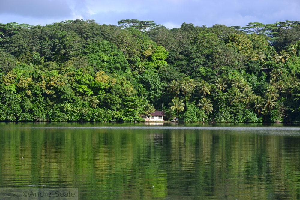 Vegetação densa - litoral da Micronésia