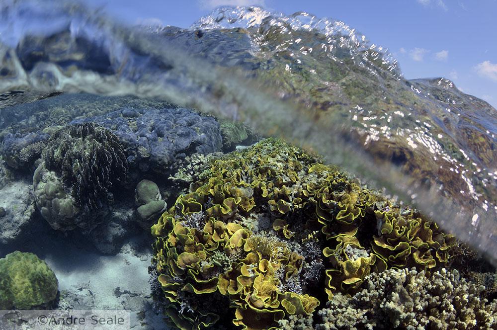 Coral - Mwand Pass - snorkel em Pohnpei - Micronésia