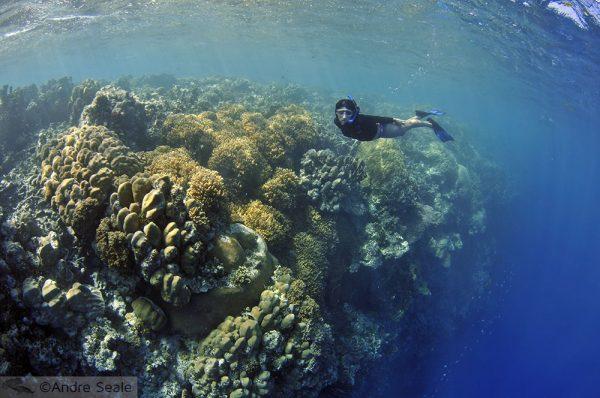 Uma Malla pelo Mwand Pass - snorkel em Pohnpei - Micronésia