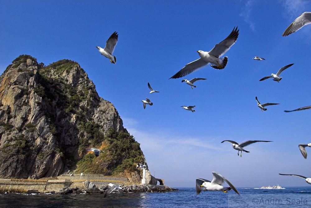 Pássaros marinhos - Ulleungdo - Coréia do Sul