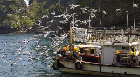 Ulleung-do: a ilha das lulas