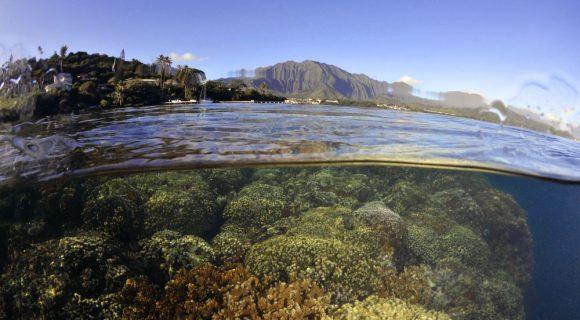 Sexta Sub: home, sweet aloha home