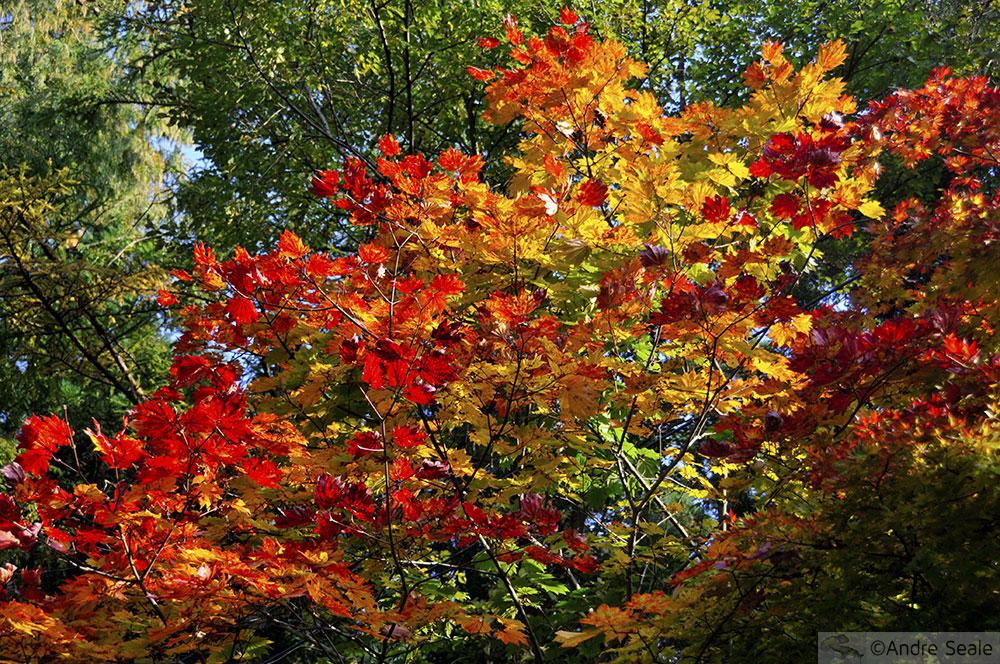 Folhagem de outono no Japão - Nikko