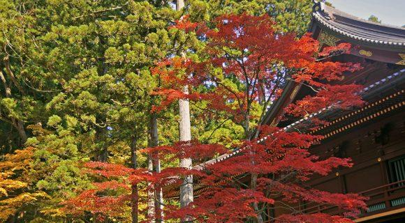 Outono no Japão