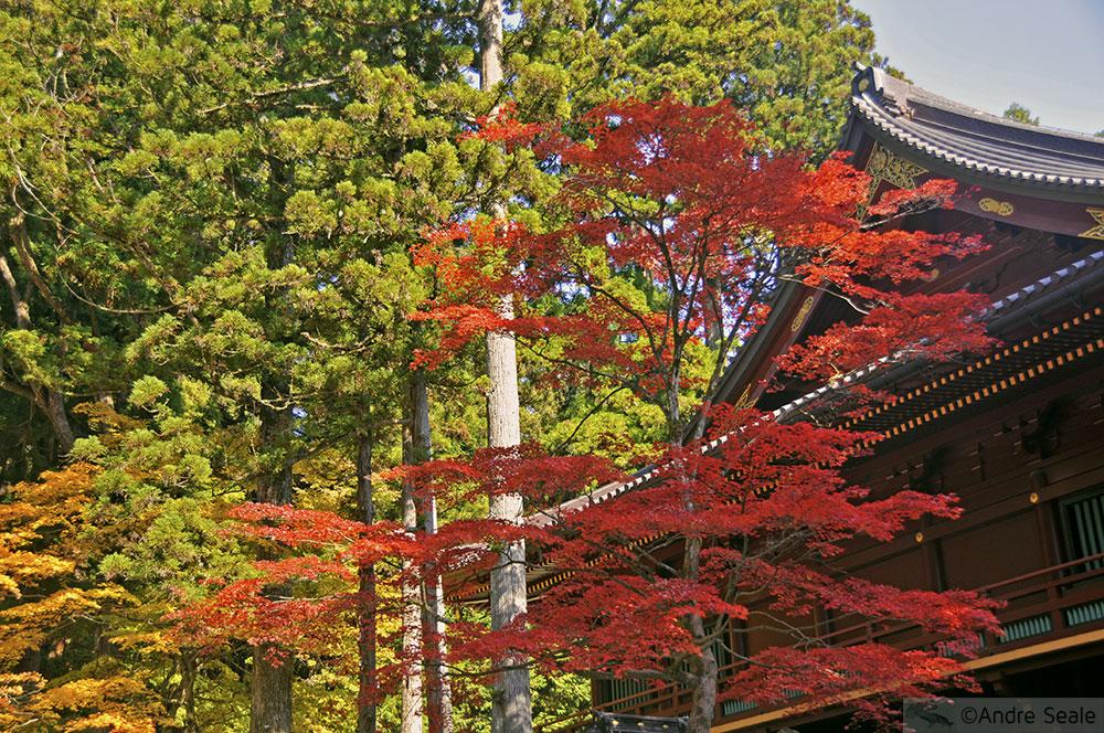 Outono no Japão - Templo de Toshogu - Nikko