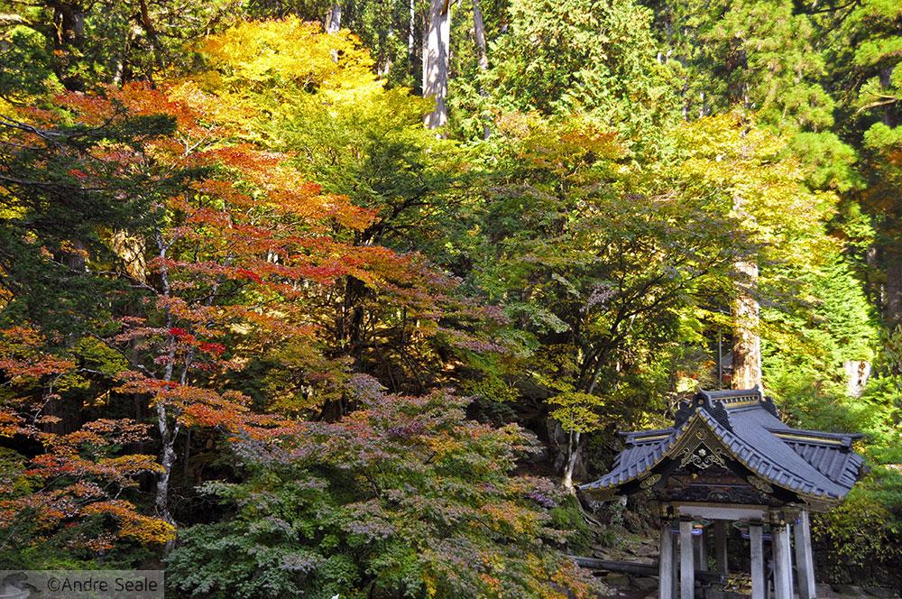 Outono - Templo de Toshogu - Nikko - Japão