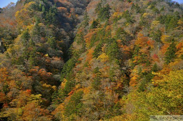 Outono no Japão - Nikko
