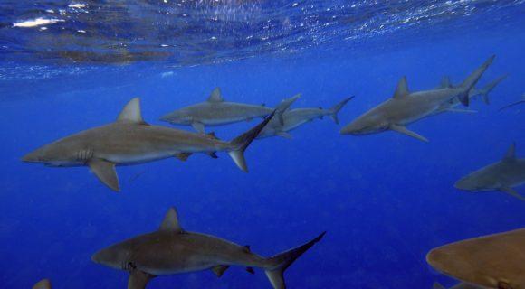 Sexta Sub: pequenas anotações de viagens tubaronísticas!