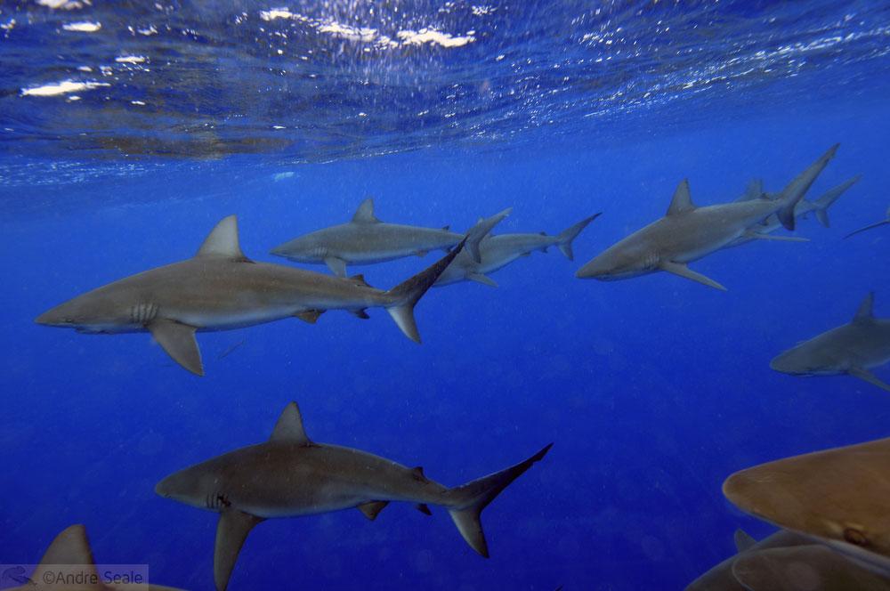 pequenas anotações de viagens tubaronísticas