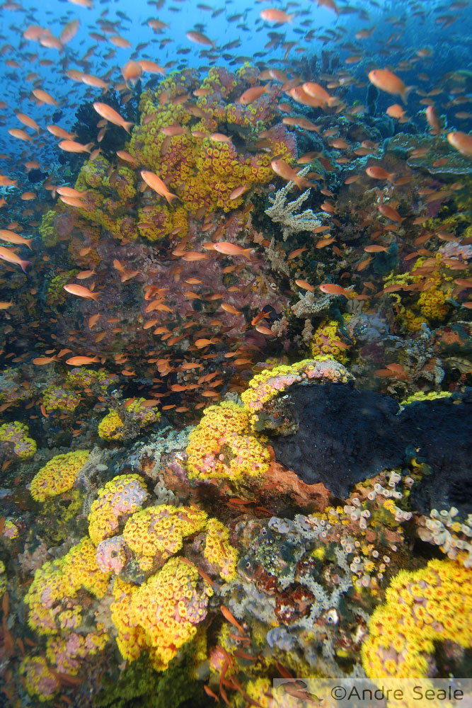 Take for Granted - ação de graças - recife de coral saudável