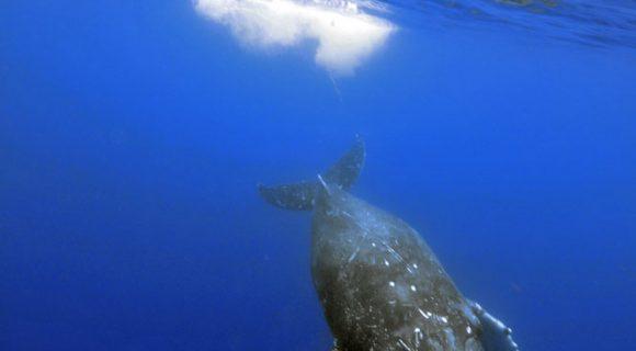 Sexta Sub: baleia por todos os lados