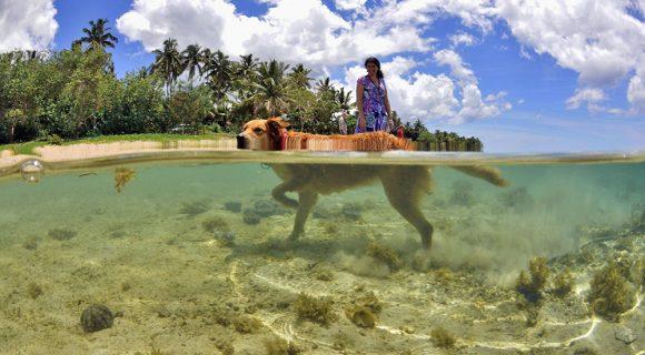 Sexta Sub: melhor amigo fijiano