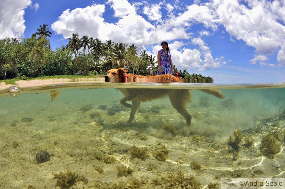 Cachorro - o melhor amigo fijiano - Sexta Sub