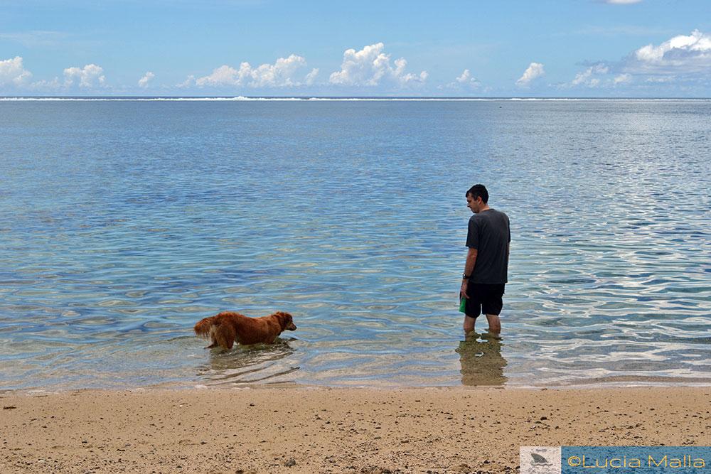 Cachorro amigo fijiano